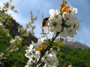 3 Сиома весна
